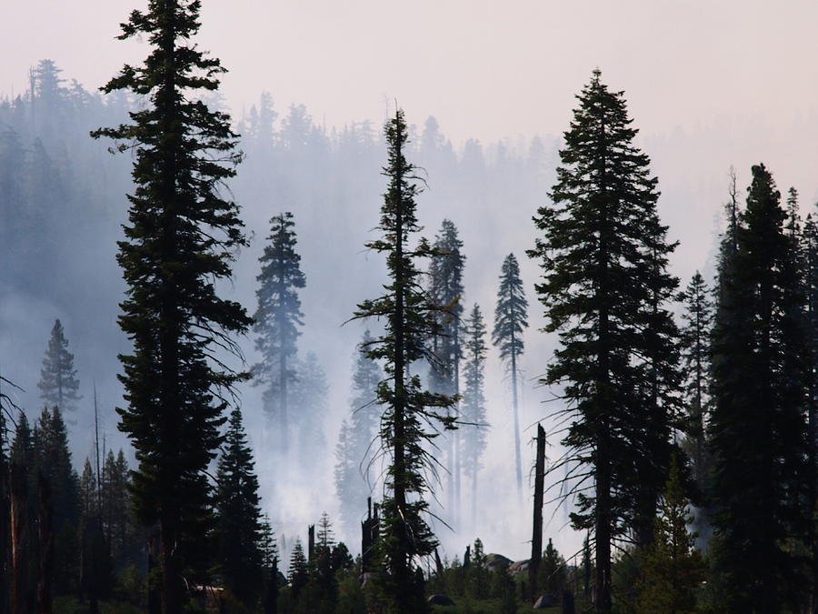 Forest Management Burn In Yosemite Photograph by Wirehead Arts