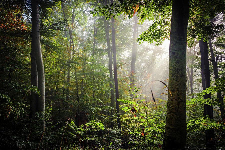 Forest Nook by Evgeni Dinev