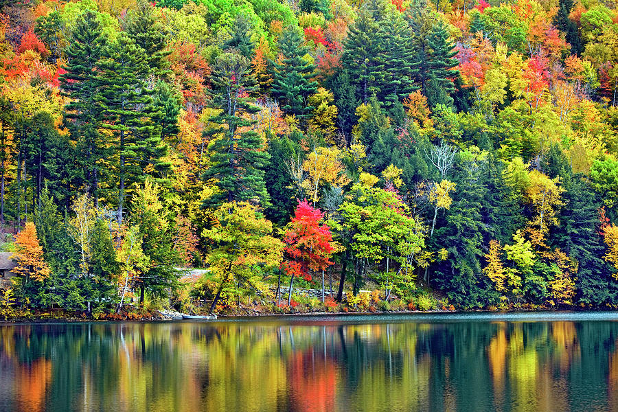Forest Over Lake In Vermont Photograph by Visions Of Our Land