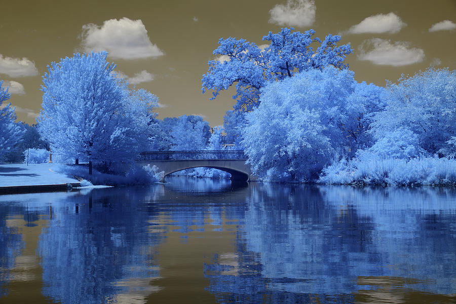 Forest Park in Infrared 3 by Lynda Fowler