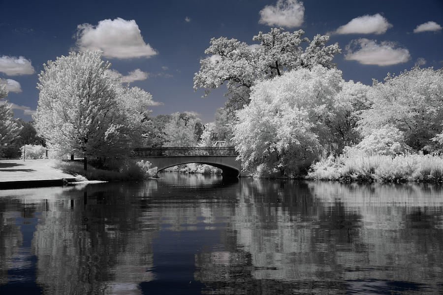 Forest Part in Infrared 2 by Lynda Fowler