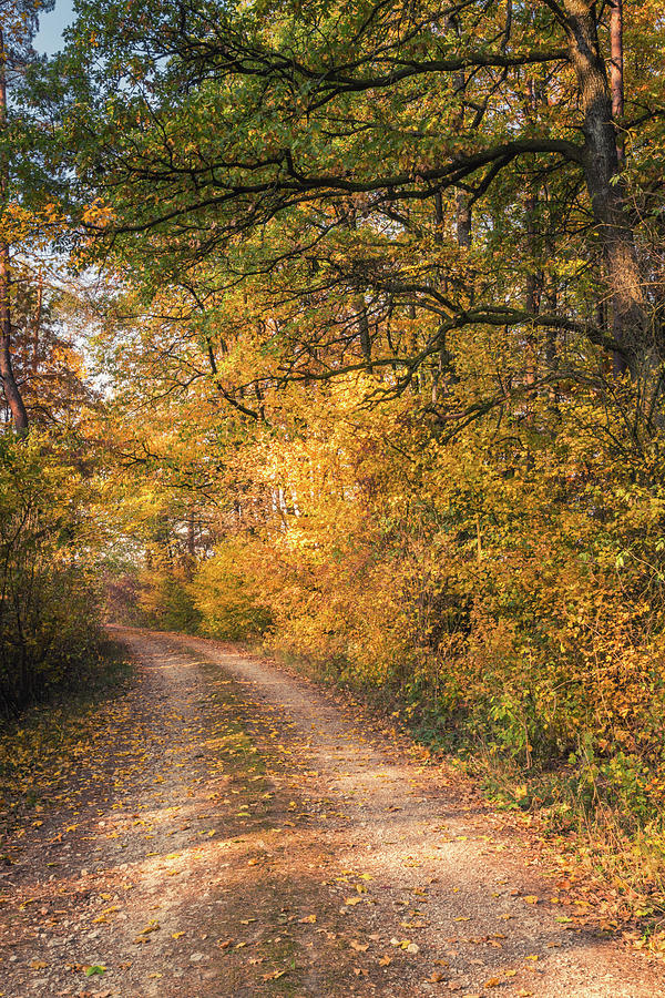 Landscape Photograph - Forest Path by Toby Luxberg