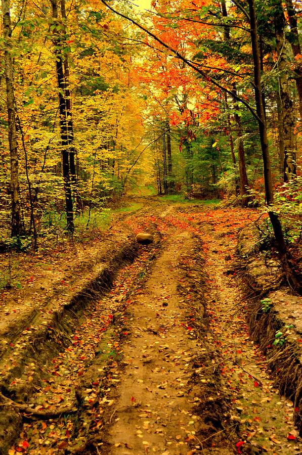 Forest road by Henryk Gorecki