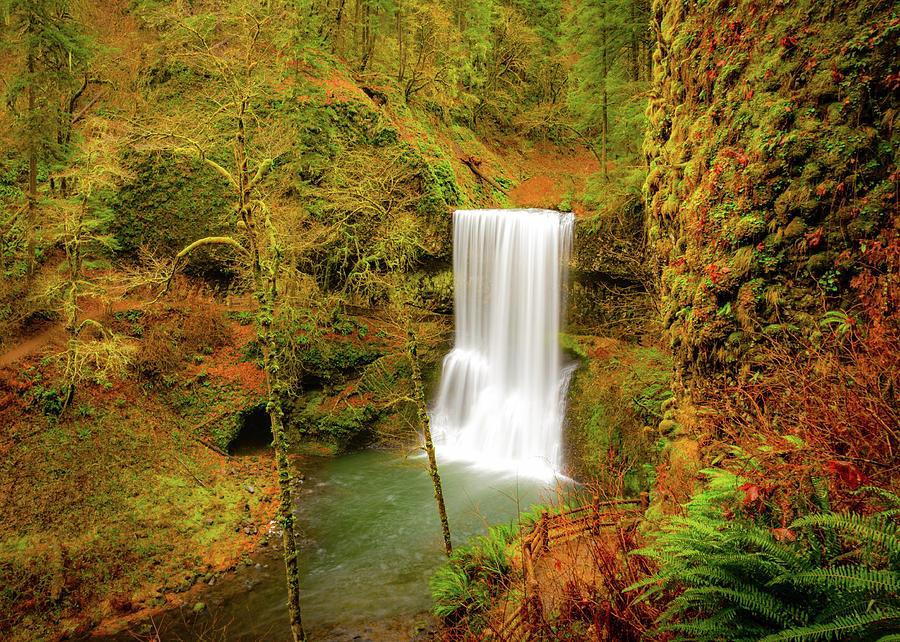 Forest Serenity by Gary Kochel