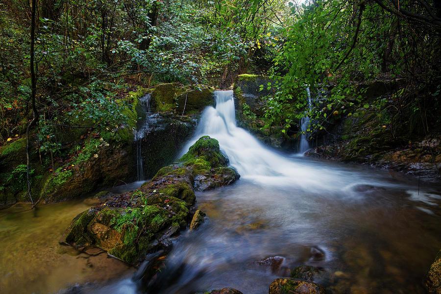 Forest stream  by Yuri San