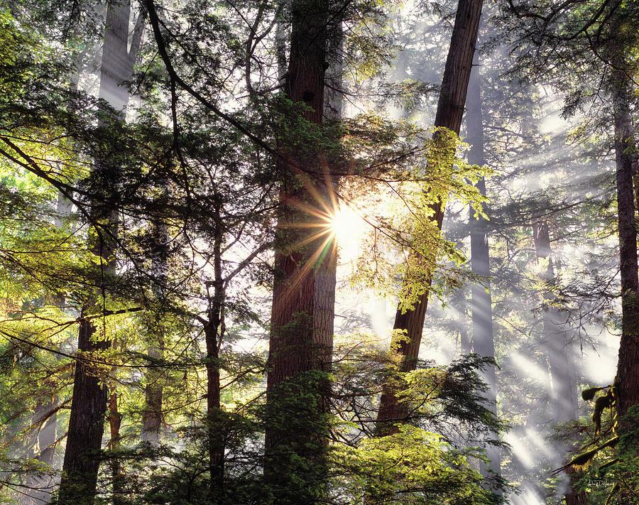 Kaniksu National Forest Photograph -  Forest Sunrise by Leland D Howard