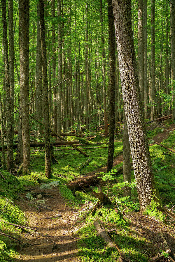 Forest Trail by Dave Matchett