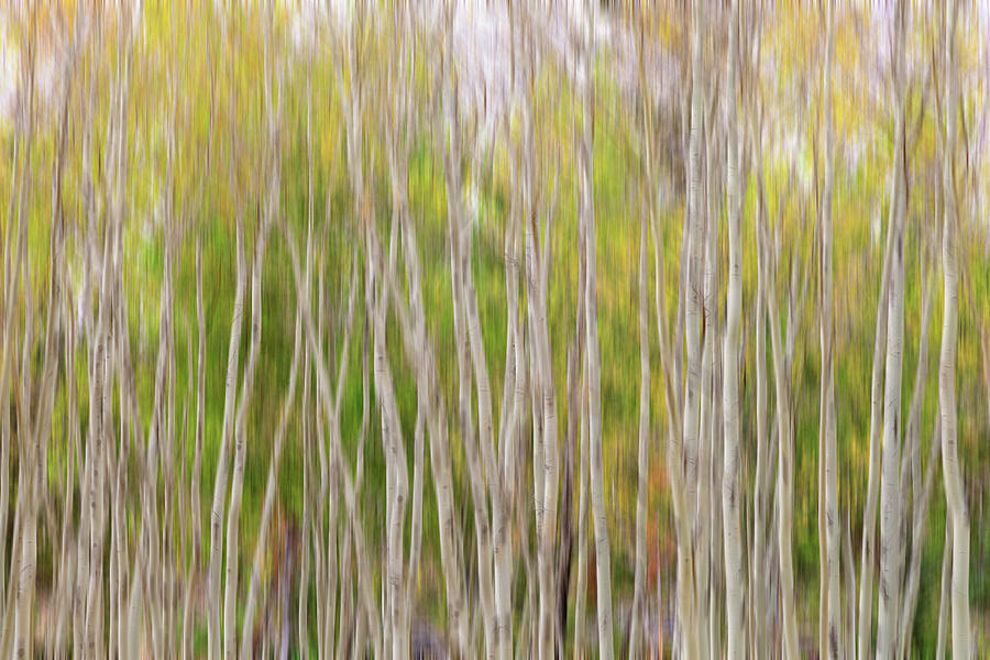 Impressionism Photograph - Forest Twist And Turns In Motion by James BO Insogna