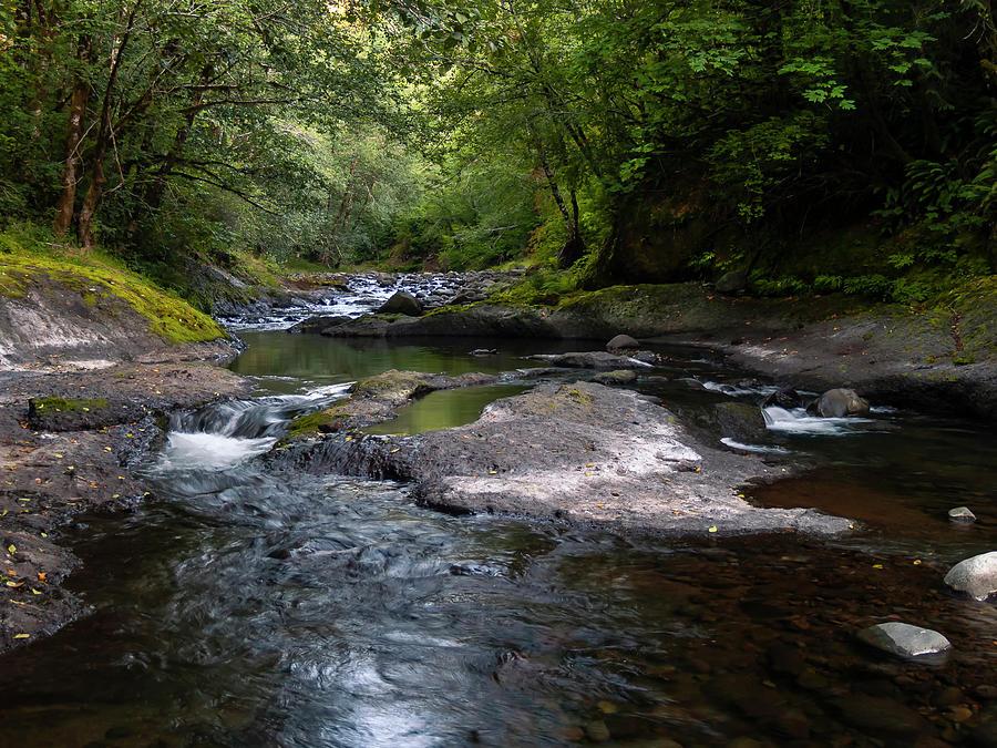 Forest Waterways by Steven Clark