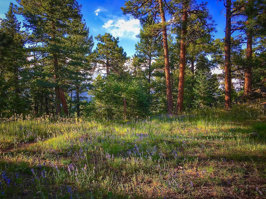 Forest Wildflowers by Dan Miller