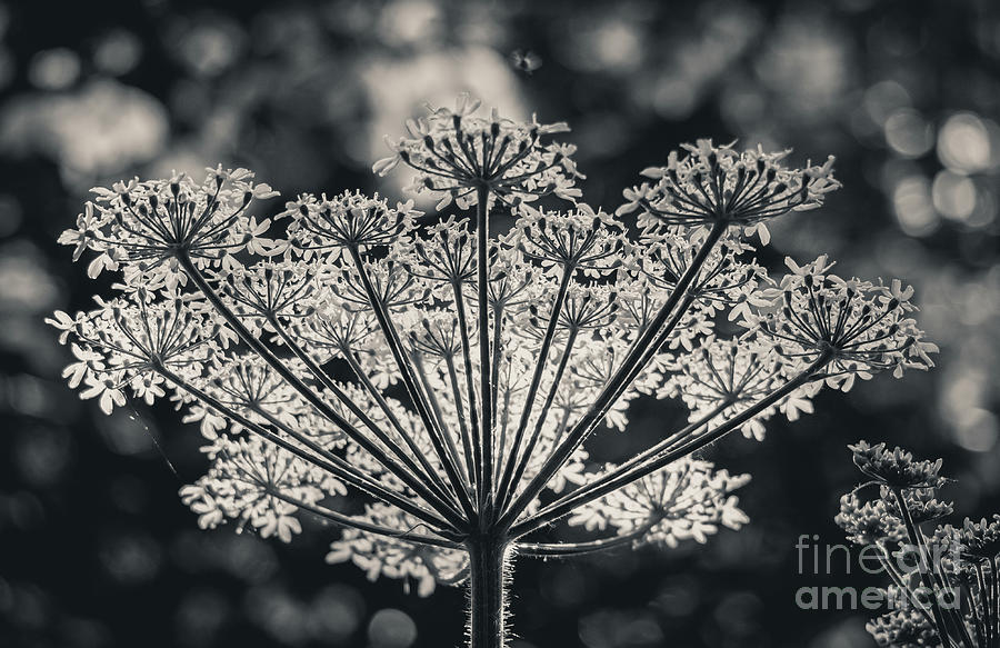 Forest's Crown. Nature Photography  by Stephen Geisel