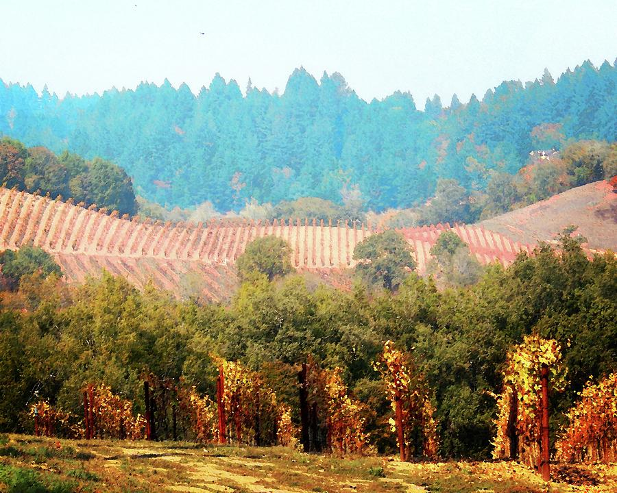 Forestville Vineyards by Timothy Bulone