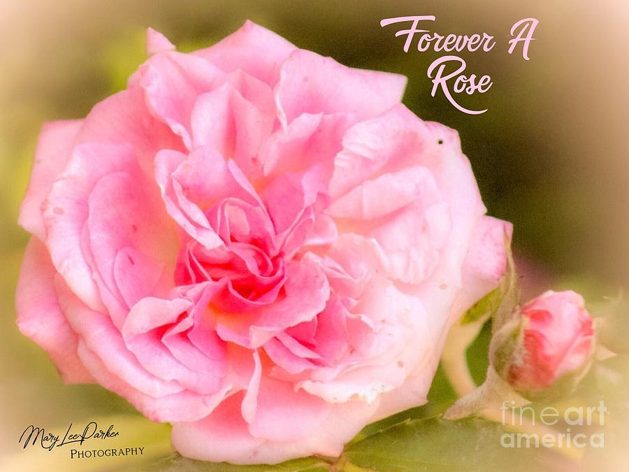 Forever A Rose  by MaryLee Parker