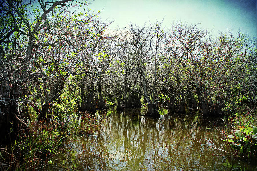 Spooked In The Everglades by Kathi Mirto