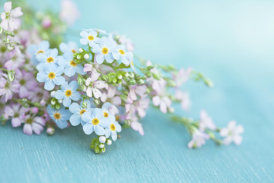 Forget Me Not And Wild Thyme Flowers Photograph by Isabelle Lafrance Photography