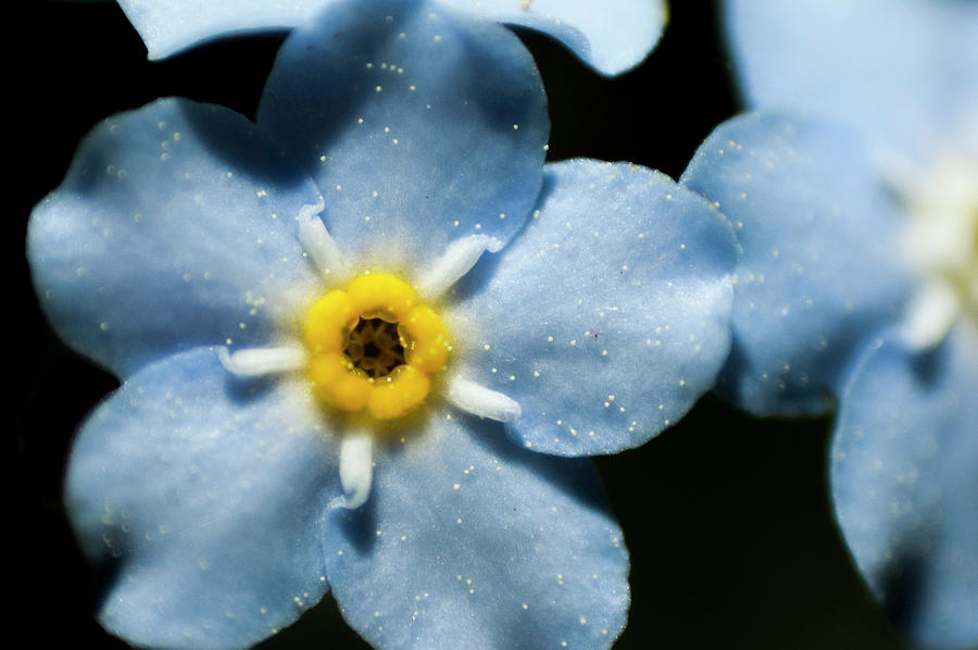 Forget Digital Art - Forget Me Not by Nathan Carlsen