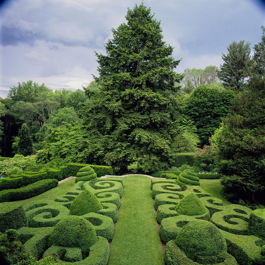Formal Topiary Garden With Hemlock Photograph By Richard Felber