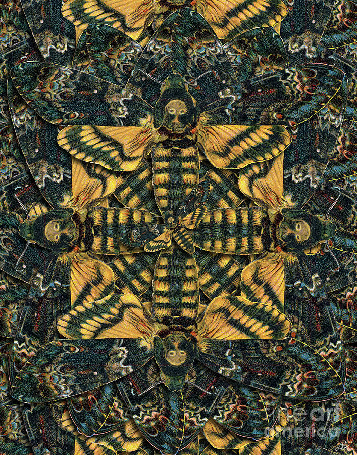 Moth Digital Art - Forms Of Nature #12 by Kenneth Rougeau