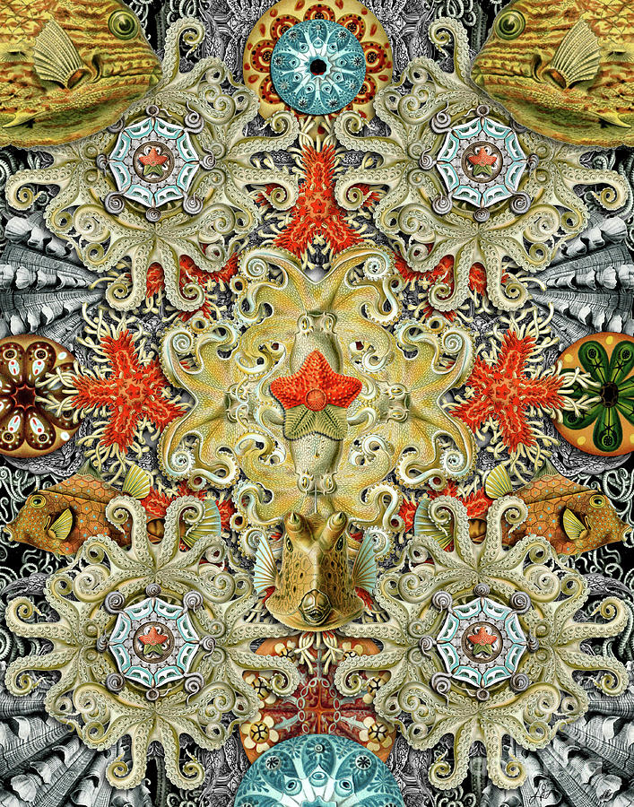 Starfish Digital Art - Forms of Nature #5 by Kenneth Rougeau