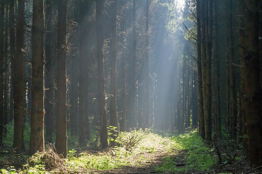 Forrest Photograph - Forrest And Sun by Anjo Ten Kate