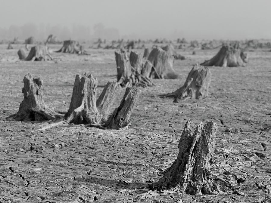 Forrest by Davor Zerjav