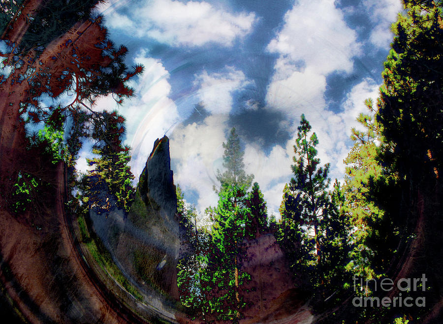 Forrest View by Katherine Erickson