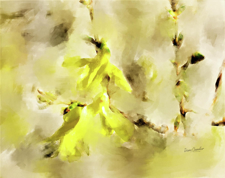 Forsythia by Diane Chandler