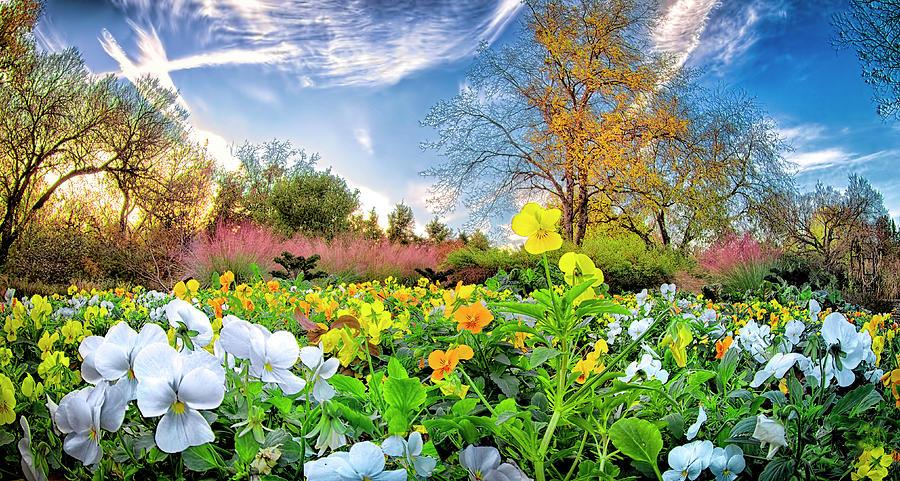 Fort Worth Botanical Gardens Photograph by Dean Fikar