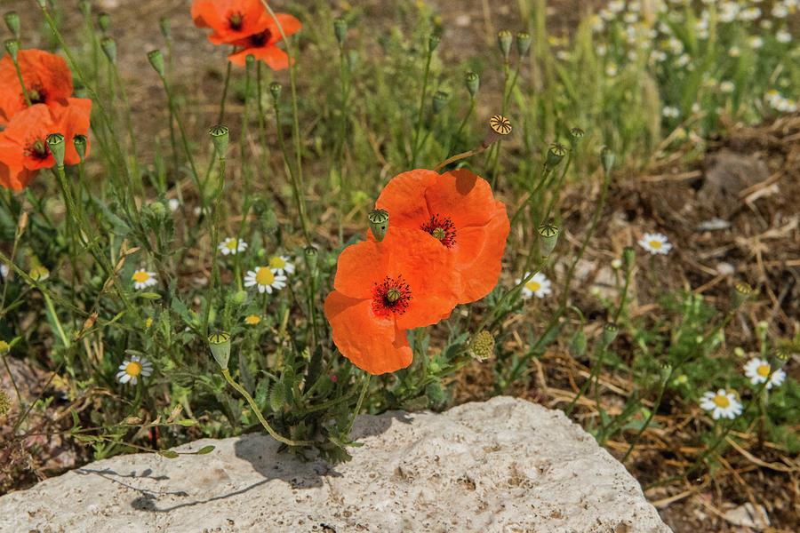 Flowers Photograph - Forum Romanum by Joseph Yarbrough