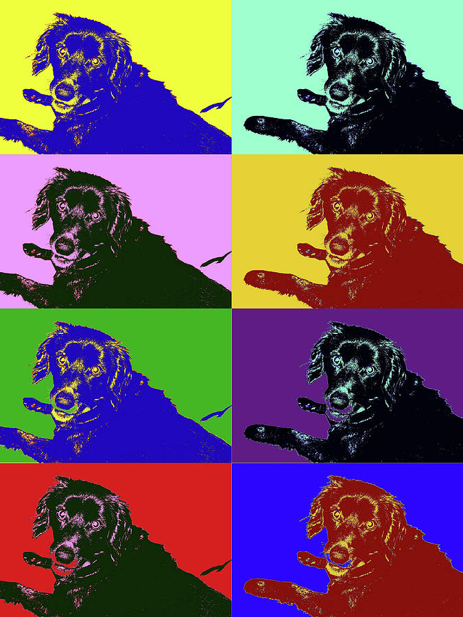 Foster Dog Pop Art by Kathy K McClellan