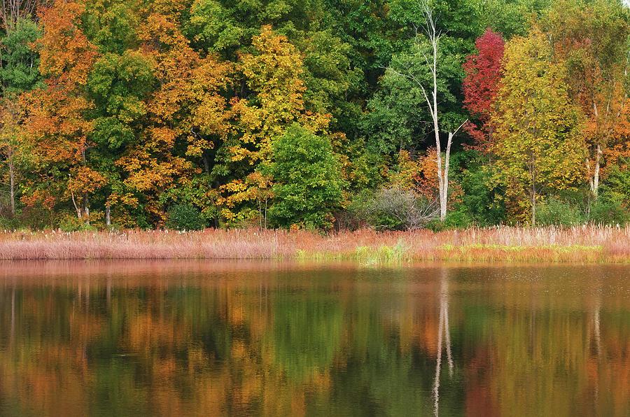 Foster Pond by David Lamb