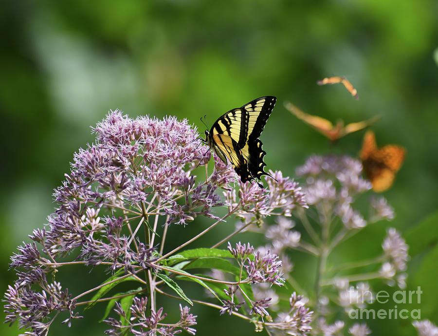 Four Butterflies by Kerri Farley