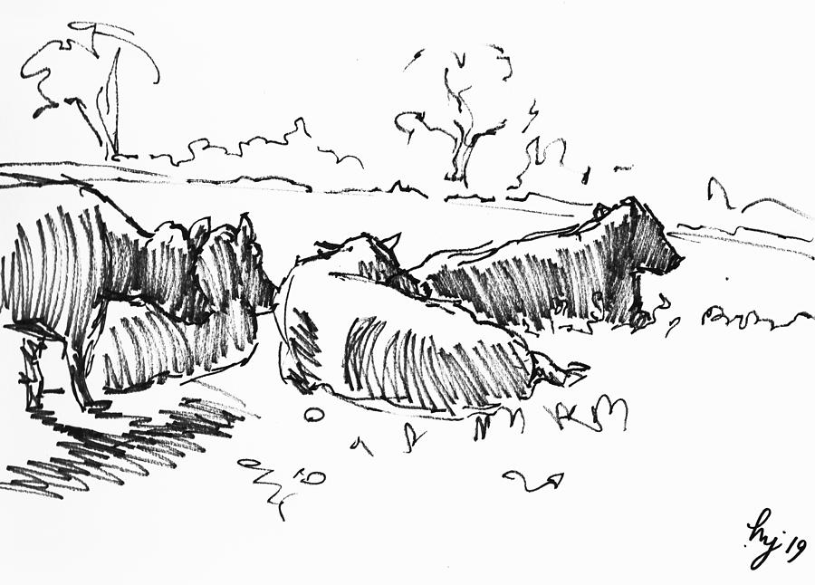 Four cows lying down in sunshine drawing by Mike Jory
