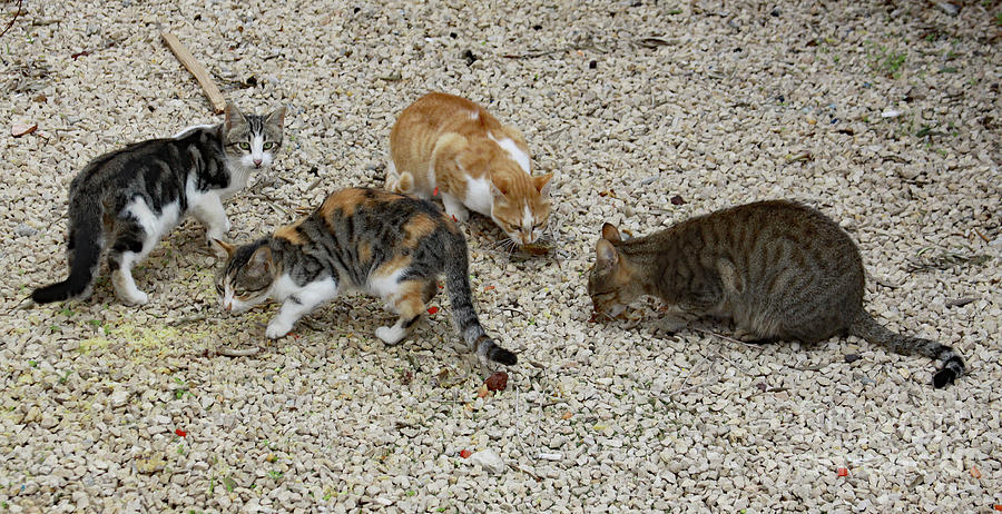 Four Foraging Felines by PJ Boylan