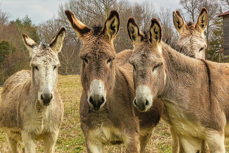 Four Friendly Mules by Douglas Wielfaert