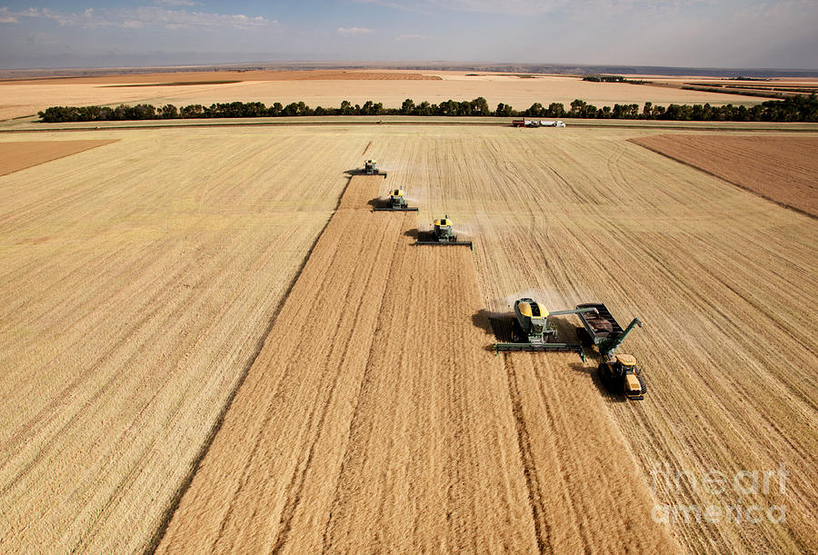 Big Photograph - Four Harvesters Combing On A Prairie by Tyler Olson