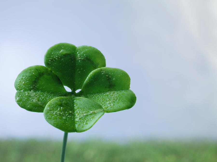 Four-leaf Clover On Field, Close Up Photograph by Jonathan Knowles