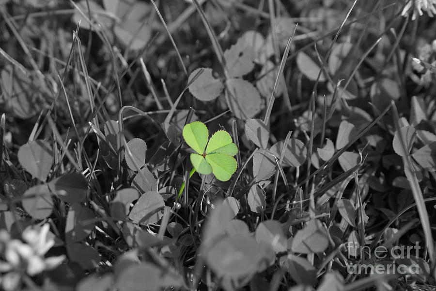 Four-leaved Clover Photograph by Tobias k