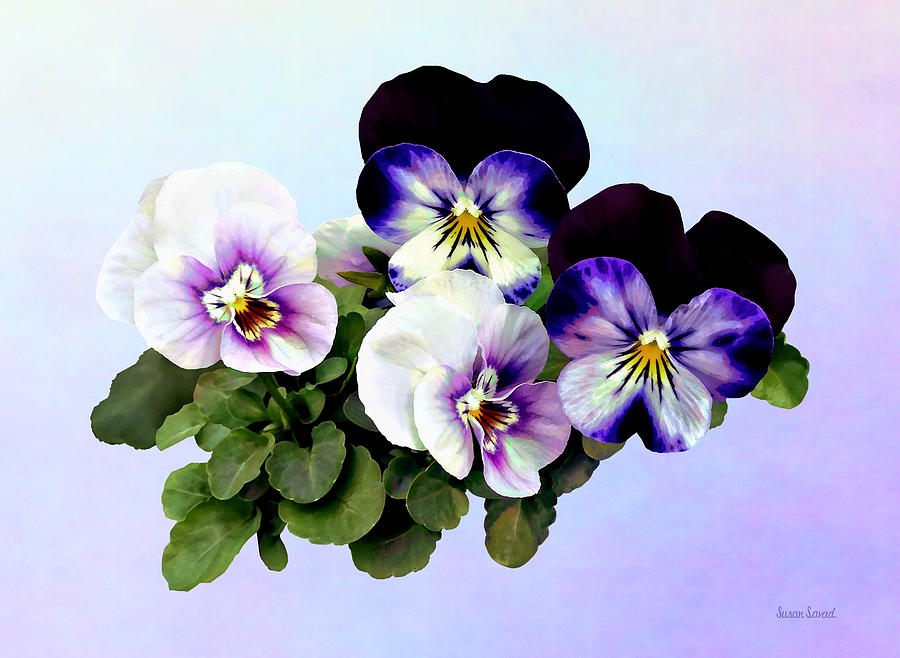 Four Pansies by Susan Savad