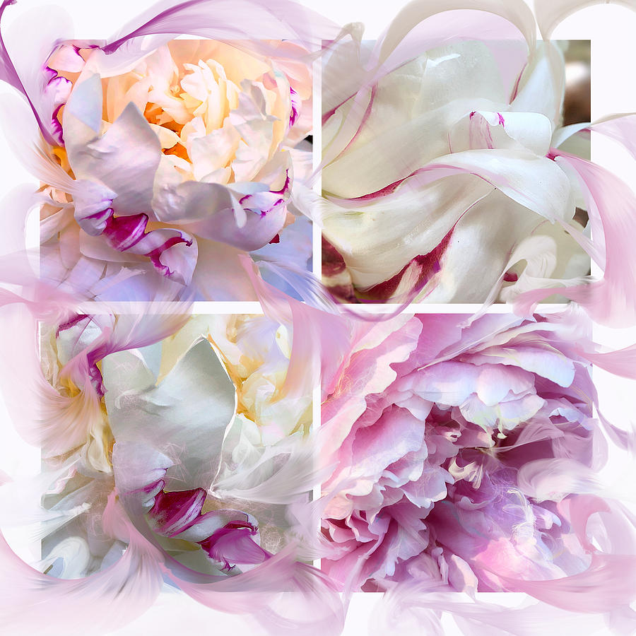 Four Peonies  by Cindy Greenstein