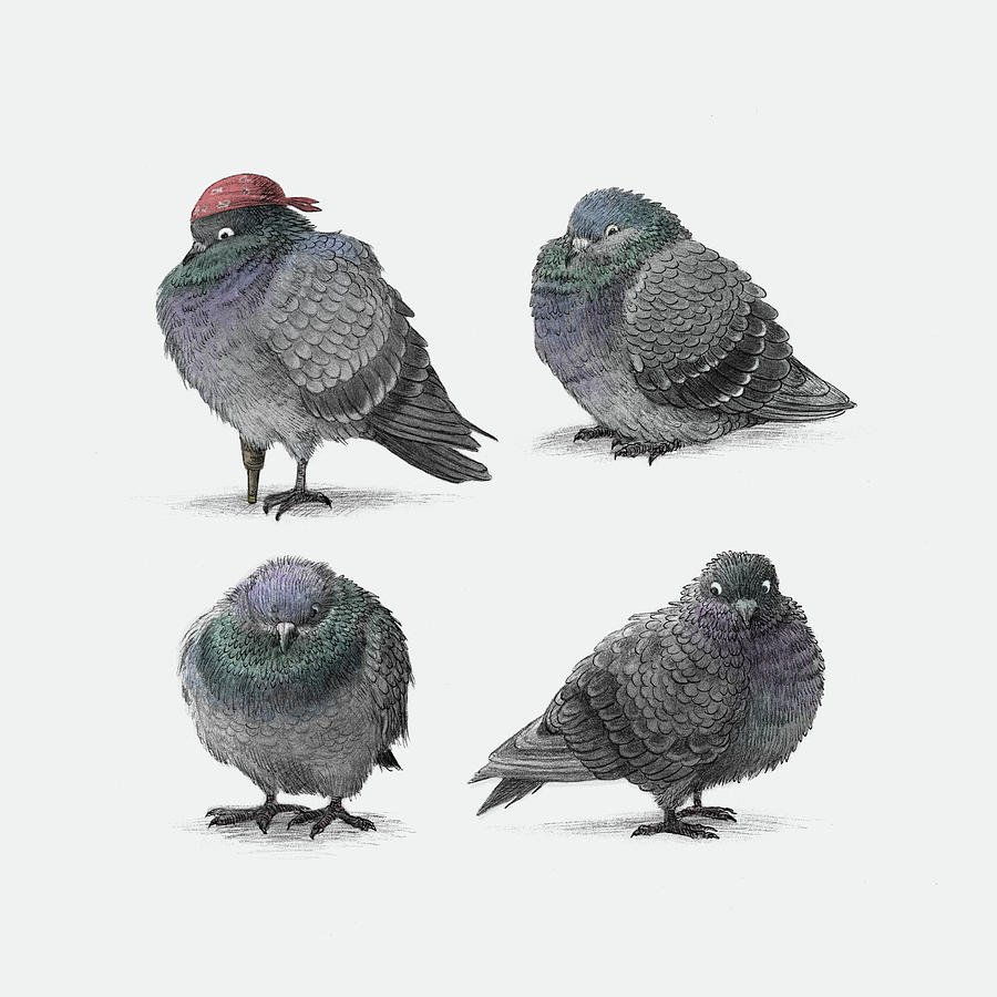 Pigeon Drawing - Four Pigeons by Eric Fan