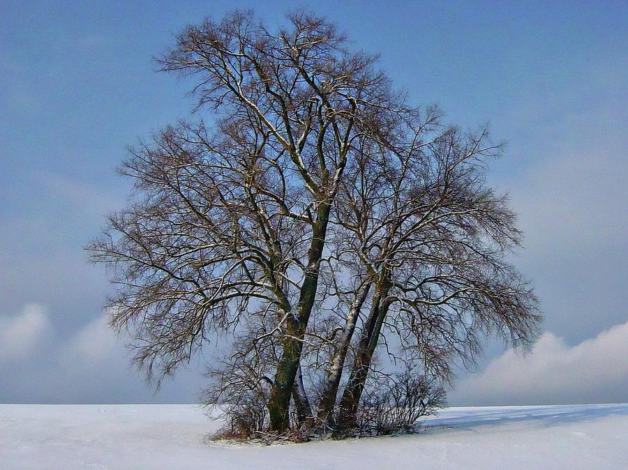 Four Poplars Winter Scene by Anthony Dezenzio