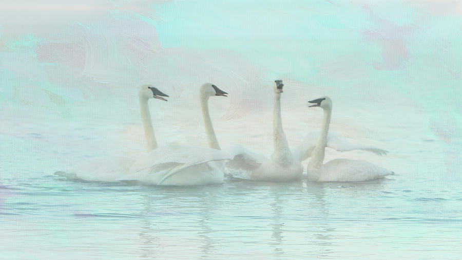 Four Swans Watercolor Group by Patti Deters