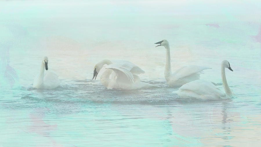 Four Swans Watercolor Group Play by Patti Deters
