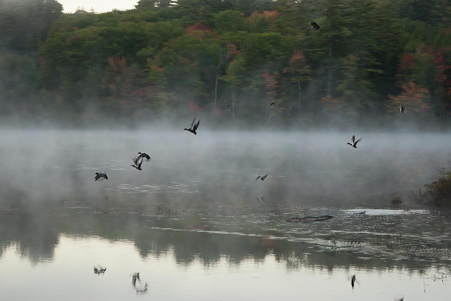 Fowl Takeoff at Lake Chocorua by Jeff Folger