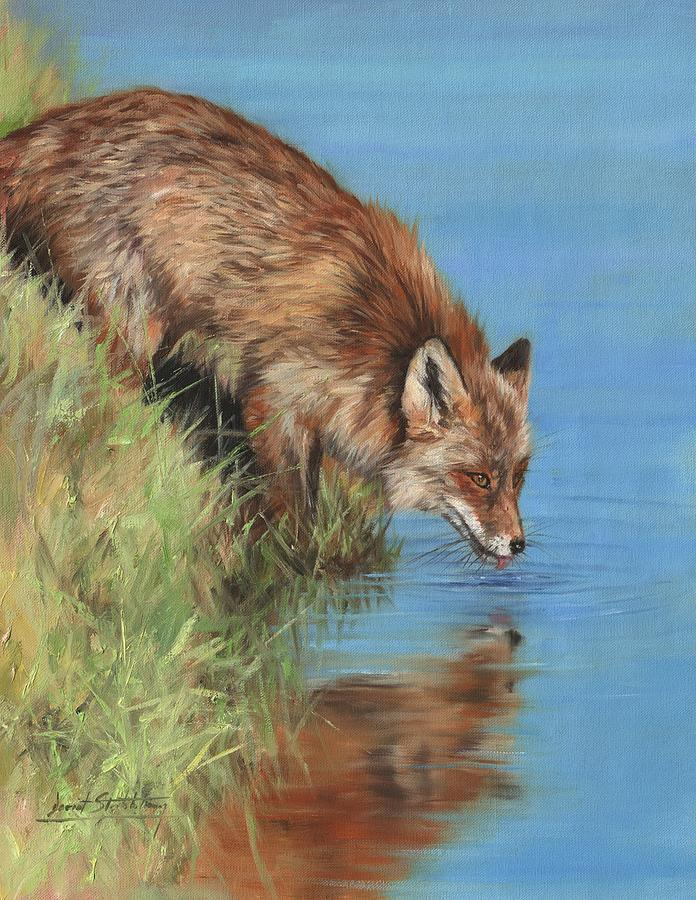 Fox Drinking by David Stribbling