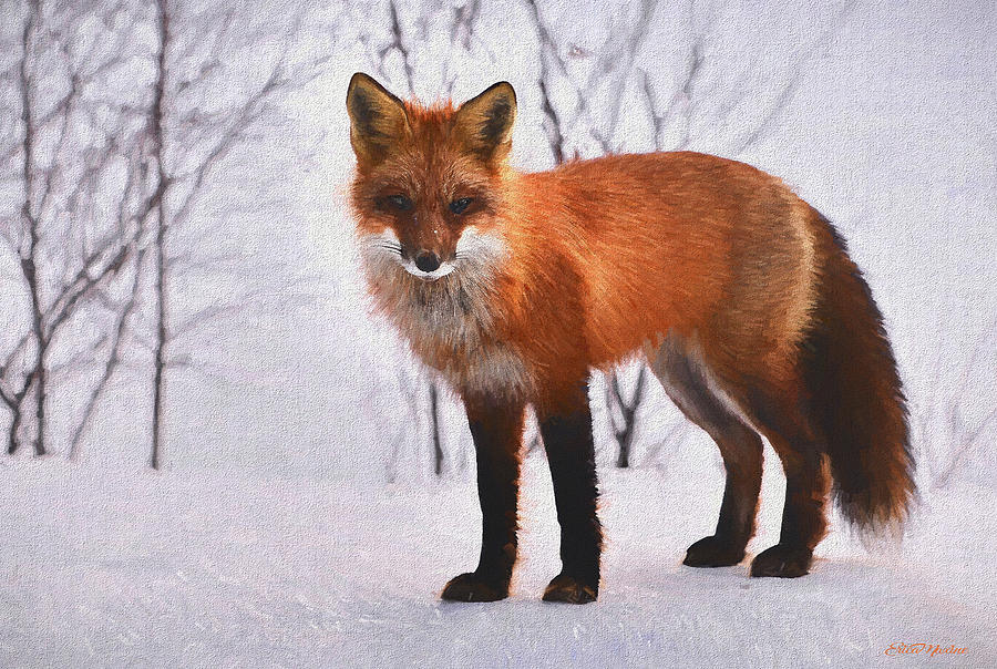 Fox in the Snow 588 - Painted by Ericamaxine Price