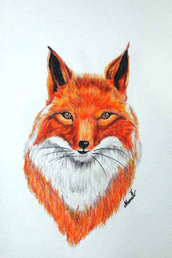 Animal Drawing - Fox by Manar Hawsawi