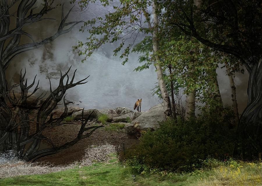 Fox on Rocks by Russ Considine