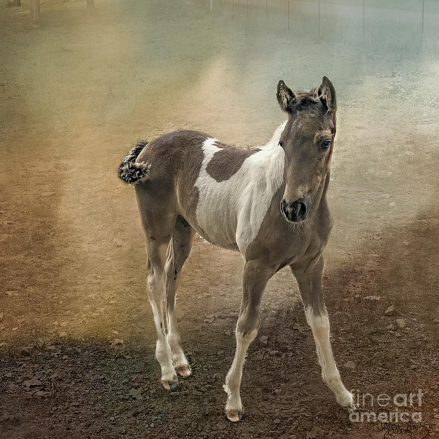 Fox Trotter Foal Horses by Peggy Franz